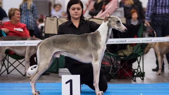 Kochasz psy? Tego nie możesz przegapić! 20 tysięcy psów i 340 ras na Euro Dog Show