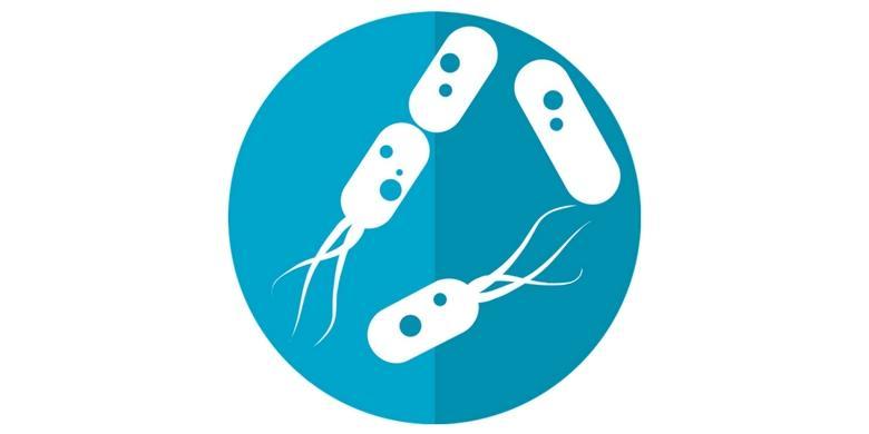 Mikroflora: jak o nią zadbać?